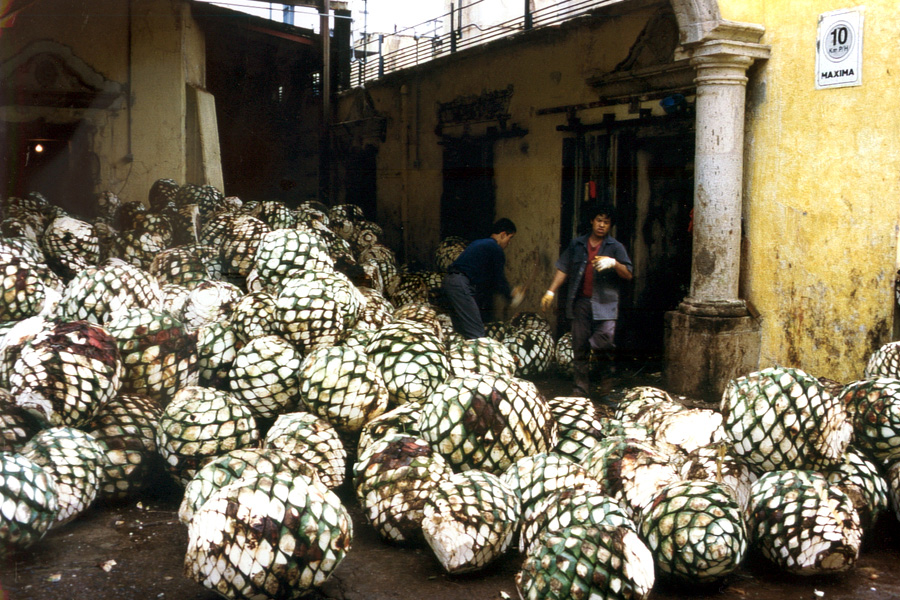 La fabrication de la tequila